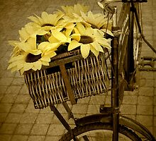 Bicycle In Vintage... Captured as still life in a public garden. Free State, South Africa by Qnita