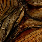 wood grain by Bryan Cossart
