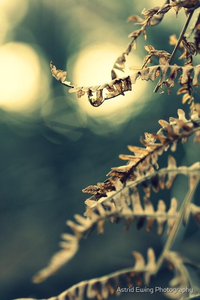 Winter Fern by Astrid Ewing Photography