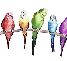 Rainbow budgie birds by bridgetdav