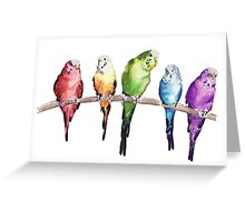 Rainbow budgie birds Greeting Card