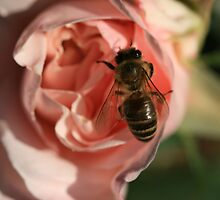 Bee Rosey by saharabelle
