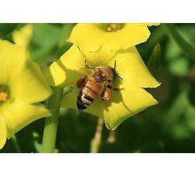 Packin' Honey Photographic Print