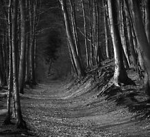 The Forest by Hans Kawitzki