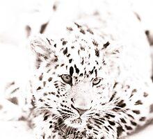Leopard Cub II by Beth Wold