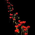 The March of the Poppies by michelleduerden