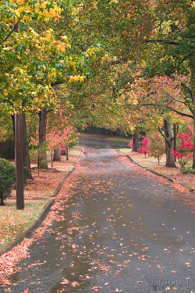 Toowoomba Autumn Colours by J Harland