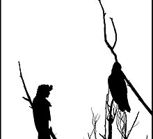 Winter Silhouette - Black Cockatoos by Kim Roper