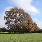 tree by brucemlong