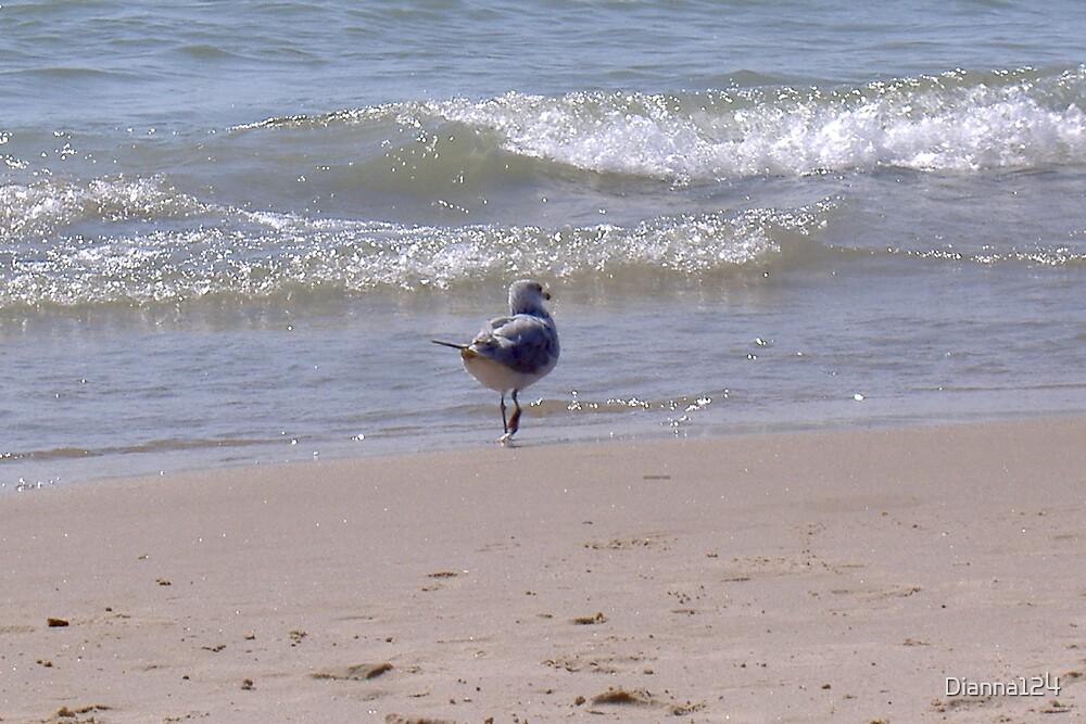 A walk on the beach by Dianna124