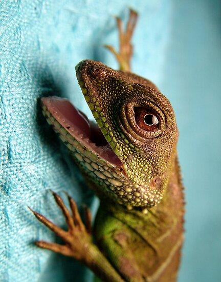 Crazy Dragon by sara montour