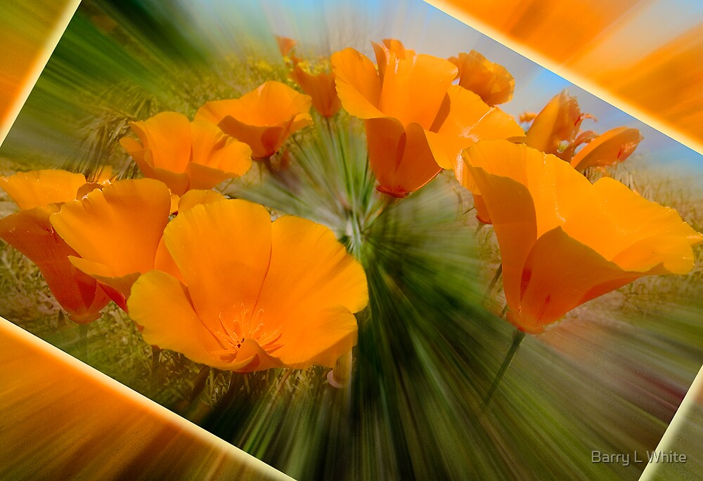 Poppies in Motion by Barry L White