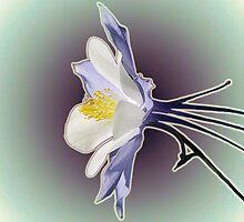 Columbine - In Isolation by Barry L White