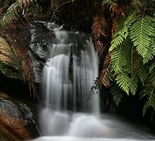 Leura Cascades - Blue Mountains, NSW by Kim Roper