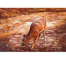 Whitetail Deer Photographic Print
