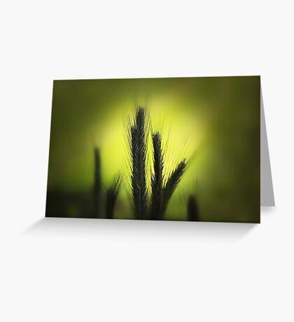 La Luz Greeting Card