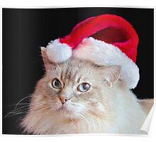 Christmas Ragdoll Cat Poster