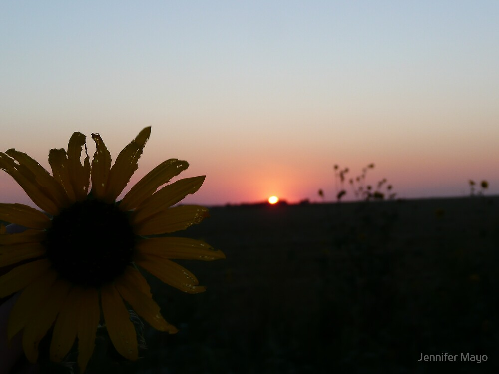 sunflower with sunset by Jennifer Mayo