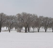 Silver Trees by Jennifer Mayo