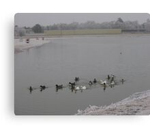 Cold Ducks Canvas Print