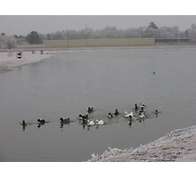 Cold Ducks Photographic Print