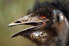 Emu by Darren Stones