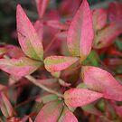 leaves by LenaMay