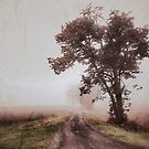 back road memories by JOSEPHMAZZUCCO