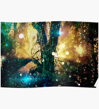 Magical Forest Tree of Life - Olympic National Park Hoh Rainforest Poster