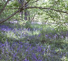 Bluebell Carpet by JeanEdgell