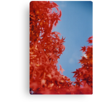 Maple Red Canvas Print
