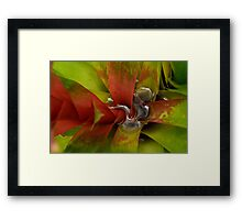 the red pigment Framed Print