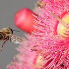 Buzz around by wazonthehill