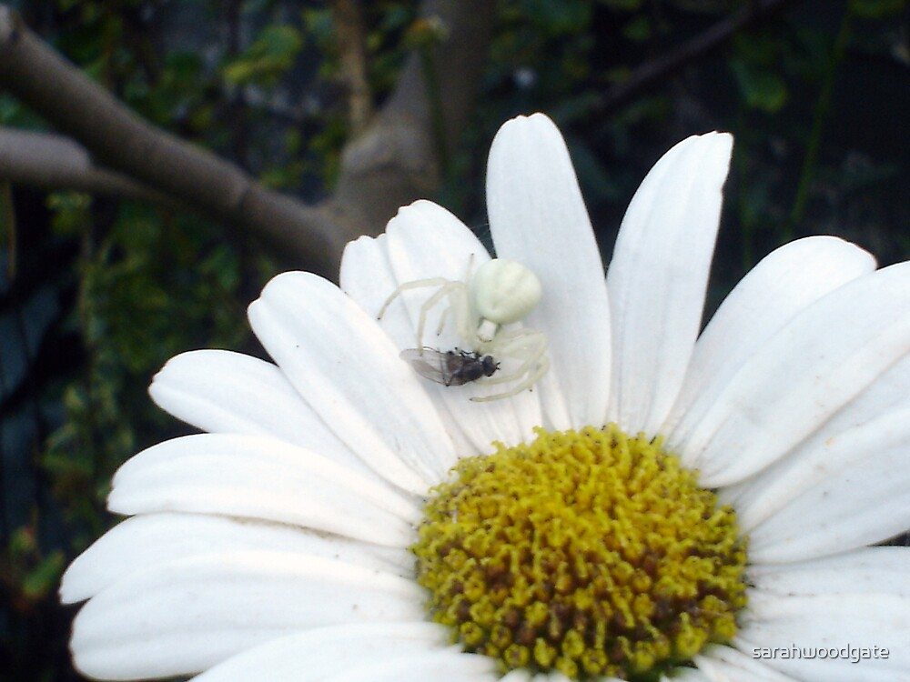 White Spider by sarahwoodgate