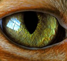 cat's eye by J.K. York