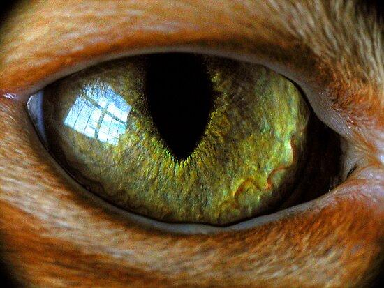 cat's eye by J.K. York