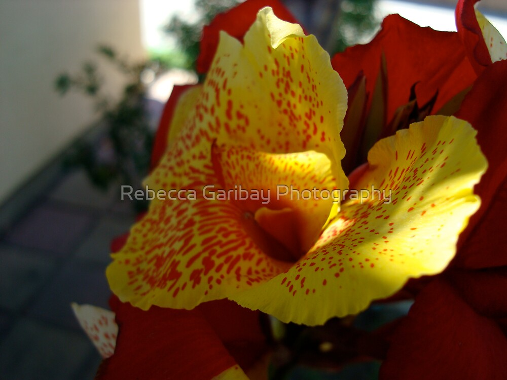 red and yellow by Rebecca Garibay Photography