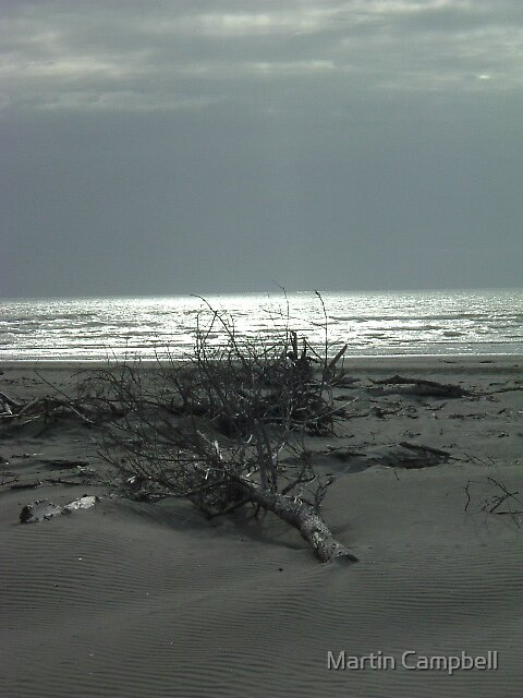 Deadwood Beach2 by Martin Campbell