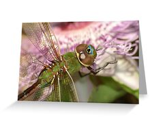 Dragon Of Passion II Greeting Card