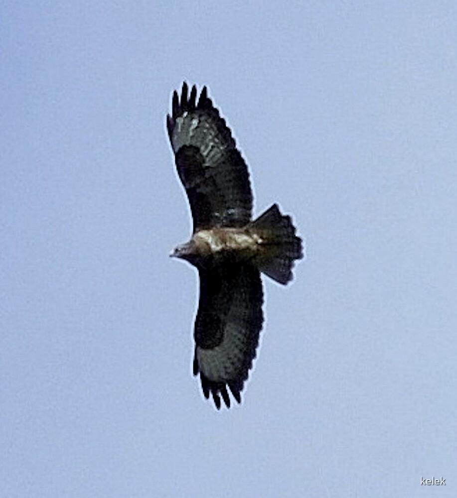Eagle 2 by kelek