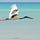 Black-necked Stork ~ Freedom Is  by Robert Elliott