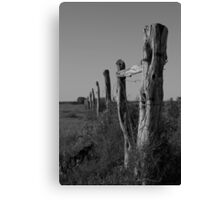 Old Nullabor fence Canvas Print