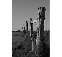 Old Nullabor fence Photographic Print