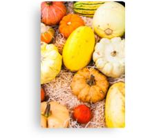 colorful autumn pumpkins on the market Canvas Print