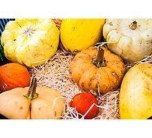 Variety of colorful autumn pumpkins on the market Photographic Print