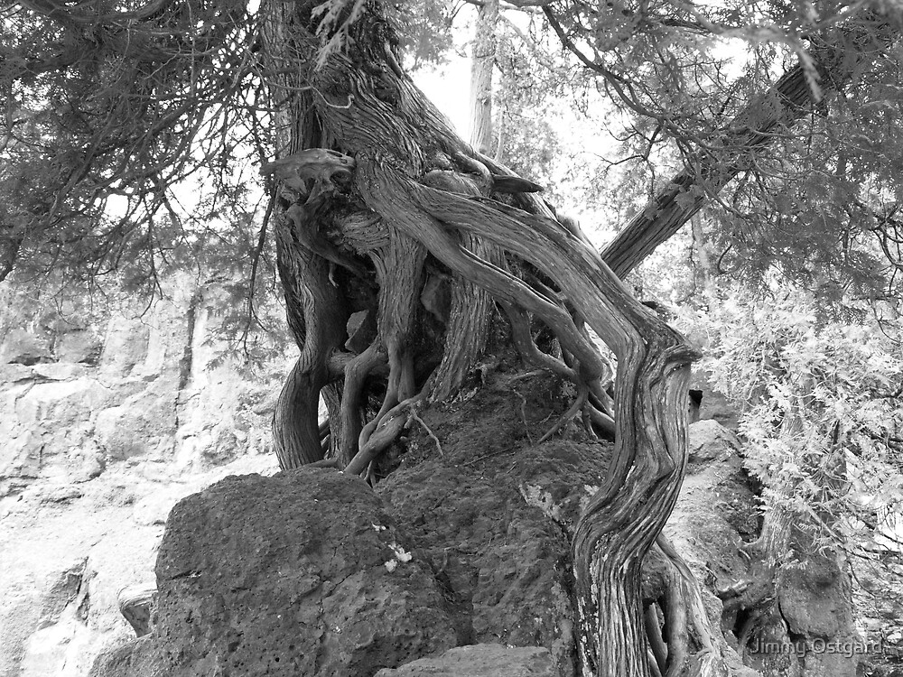 Well Rooted by Jimmy Ostgard