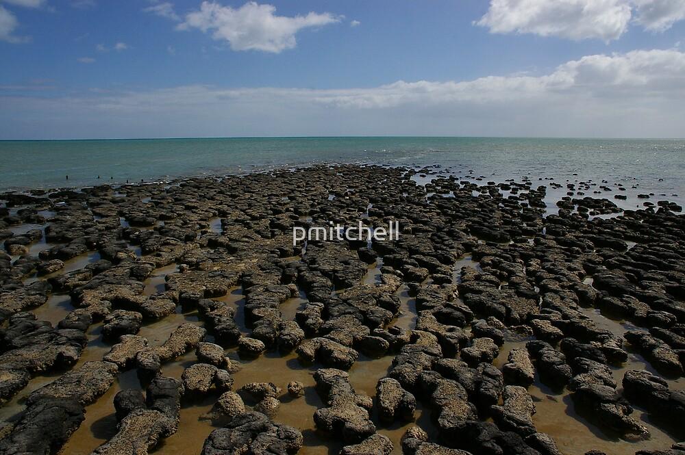 Stromatolites, Hamelin Bay, WA by pmitchell