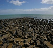 Stromatolites, Hamelin Bay, WA by pmitchell