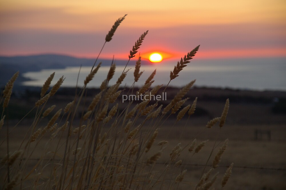 Sunset Wheat by pmitchell