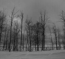 Lake Superior Shoreline by Michelle Hitt